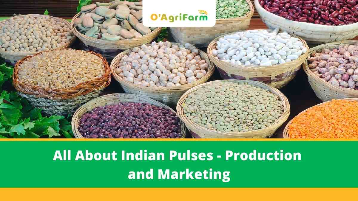 All About Indian Pulses - Production and Marketing,